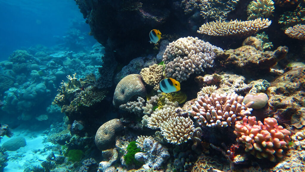 Great Barrier Reef Marine Park - 10 Best Places to Visit in Australia